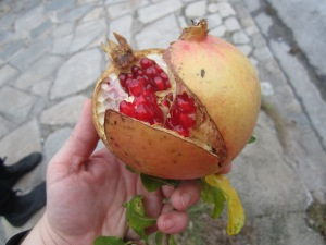 Pomegranate / Grenade / ρόδι