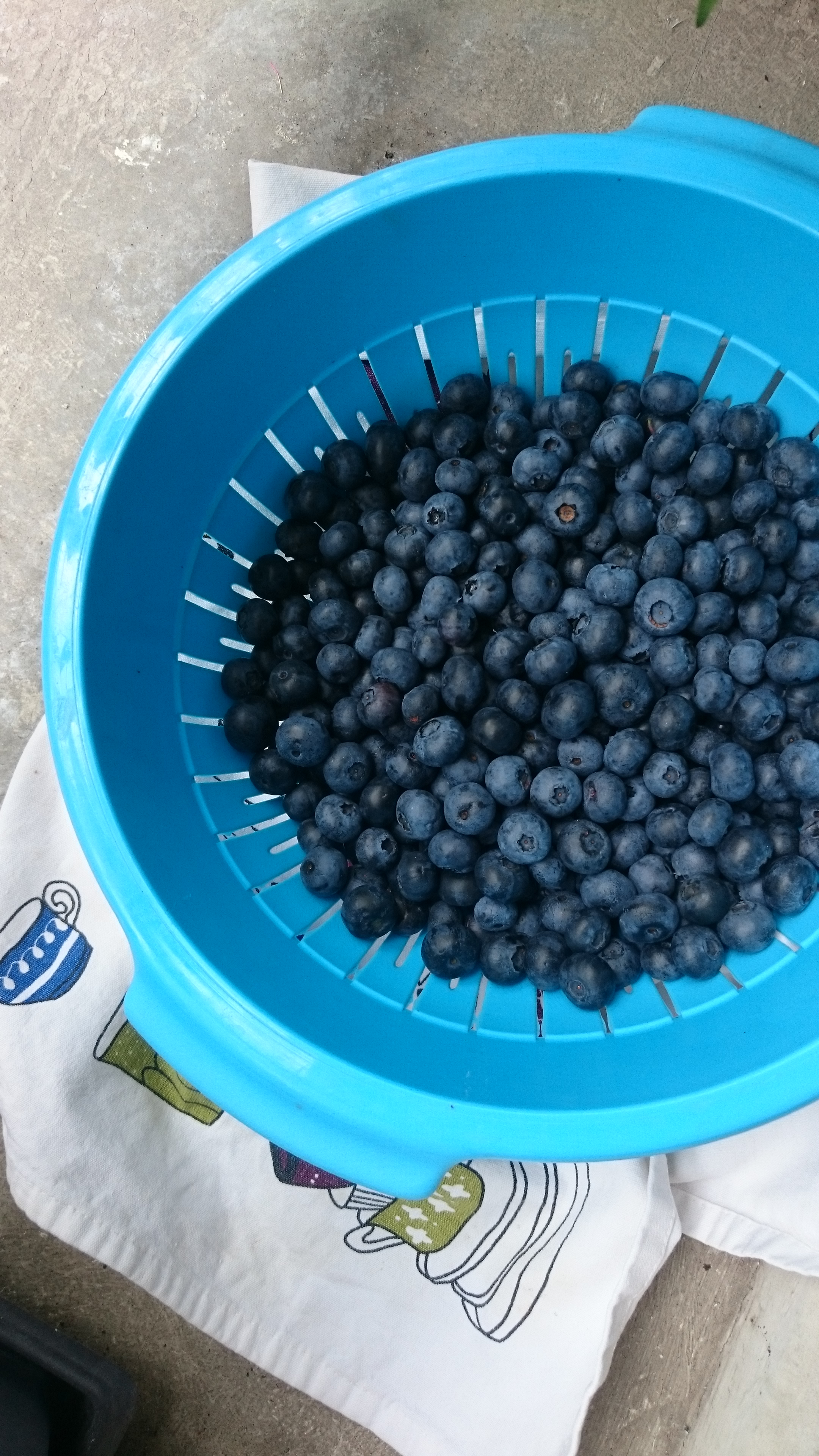 pints to pounds blueberries